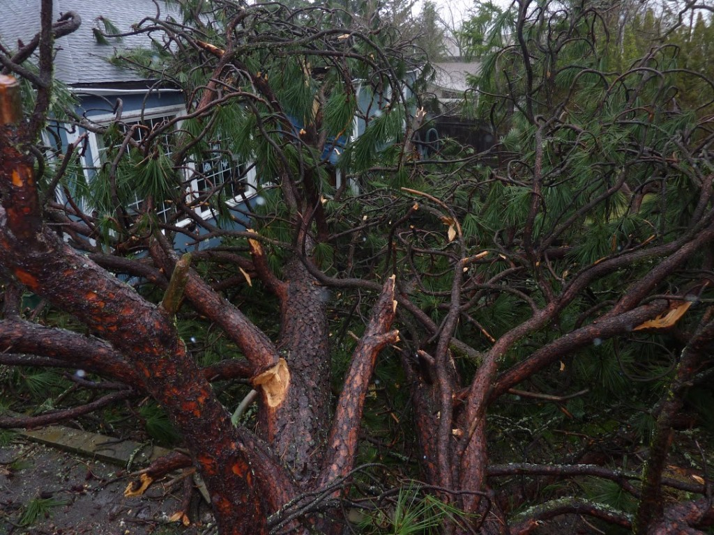 Tree Falls On House In Ashland, Oregon